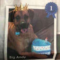 Andy – Adopted November 2017