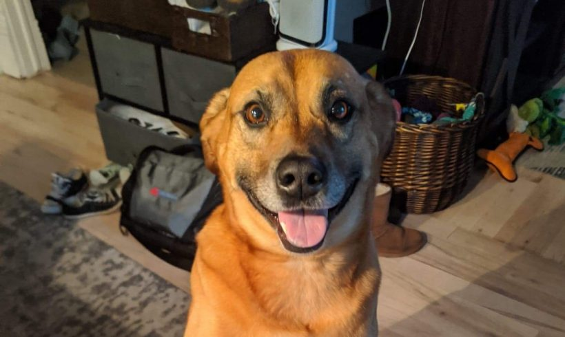 Smiley – Adopted March 2020