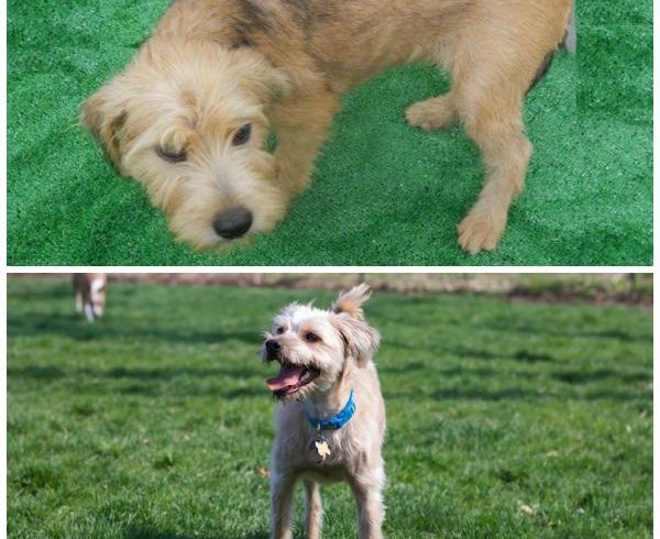 Dexter – Adopted September 2014