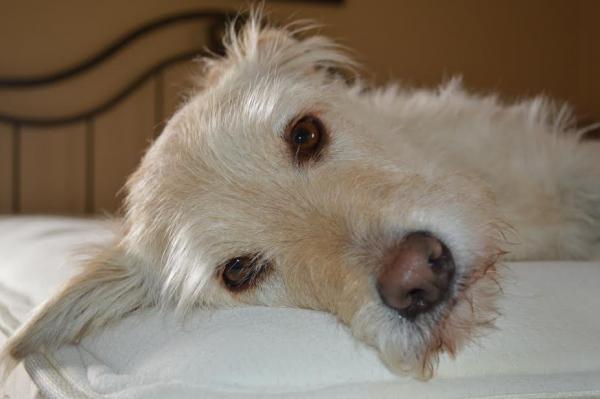 Harvey – Adopted February 2013