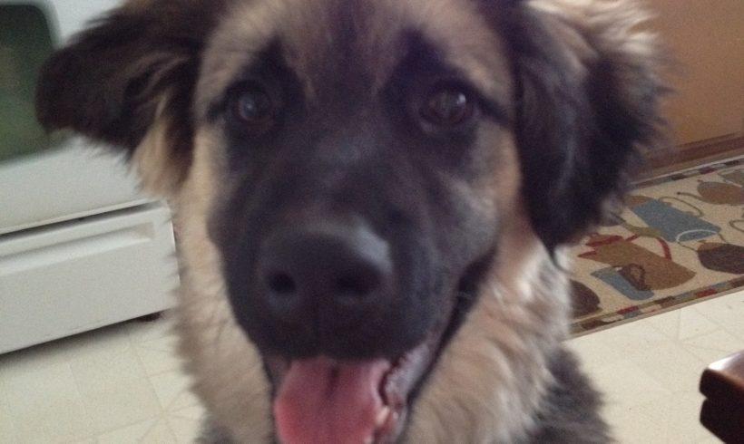 Kaos – Adopted February 2015