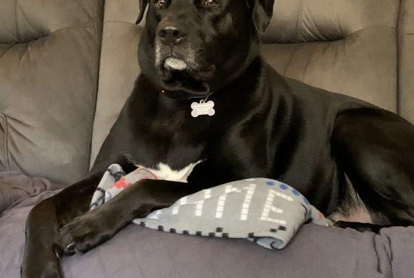 Rufus – Adopted May 2019