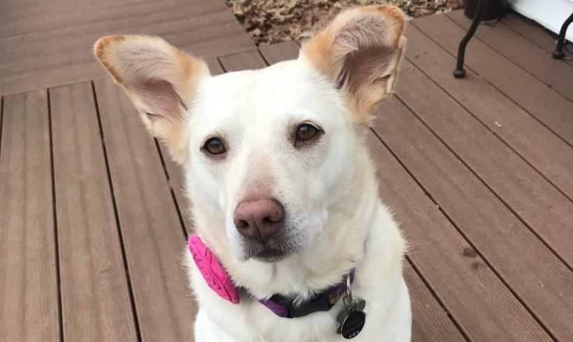 Luna – Adopted April 2016