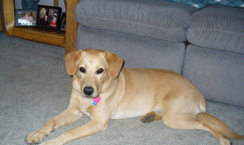 Pokey – Adopted July, 2020